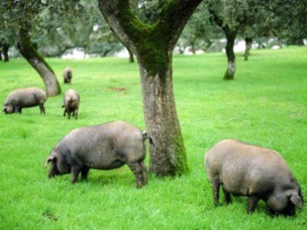 El mundo del cerdo ibérico y su diversidad gastronómica Image