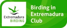 Club Birding in Extremadura