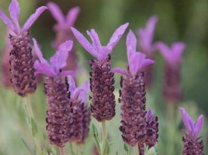 NATURALEZA Y SENDERISMO: Flores y flora. Identificando especies Image