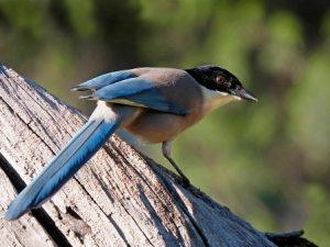SENDERISMO Y BIRDING: Pequeñas aves y rapaces. Identificando especies Image